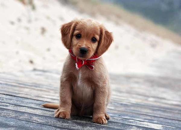 6784746-cute-little-puppy