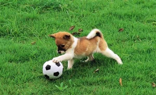 dog-play-boll_88137-1600x1200