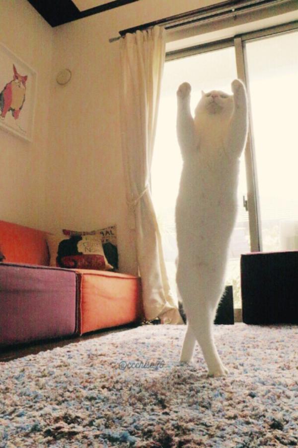 katt1