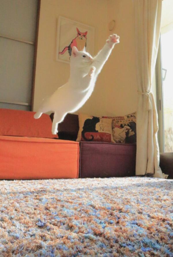 katt9