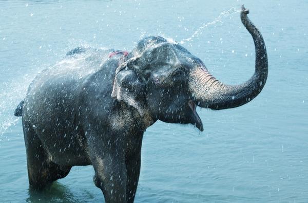 6032742-elephant