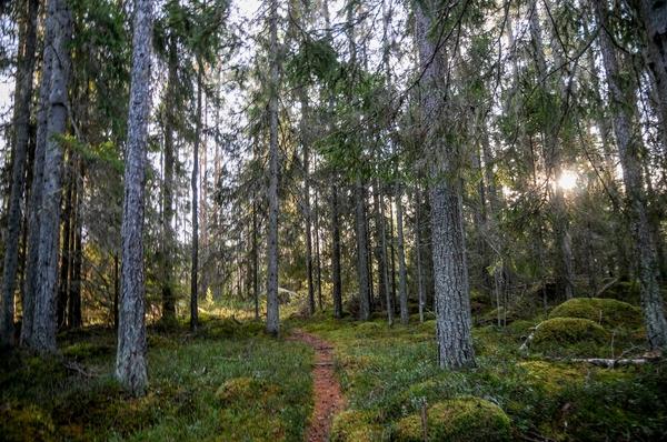 15786016-skogspromenad