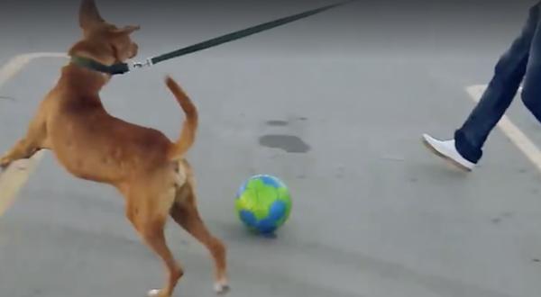 hund5