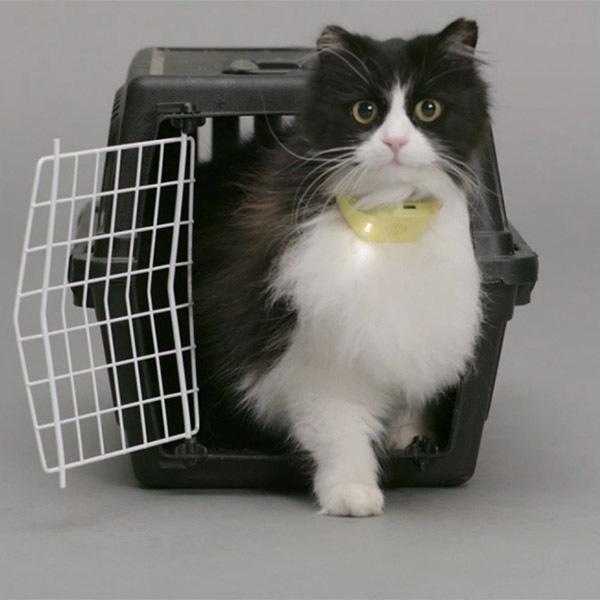 katthalsband