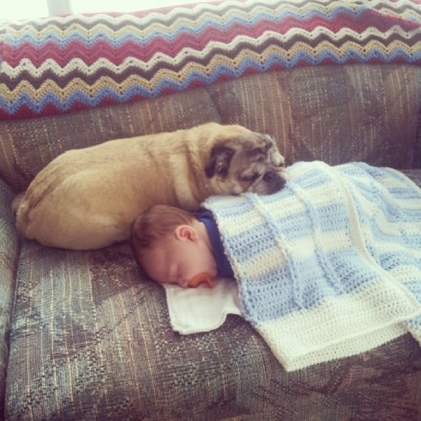 barnhund2