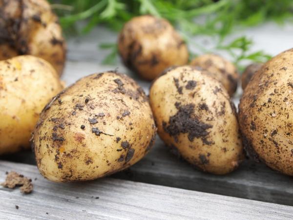 1837378-potatoes