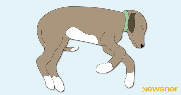 andraversionenhundar01