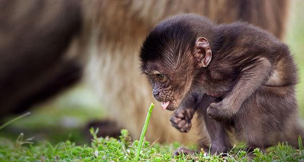 babooon2