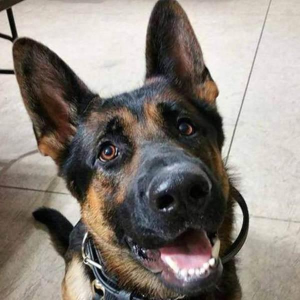 160110-police-dog-inline_14760d014e3f14f474c9df9bab8855aa.nbcnews-ux-2880-1000