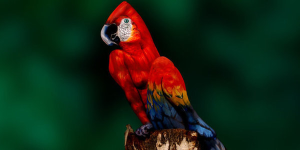 papegoja