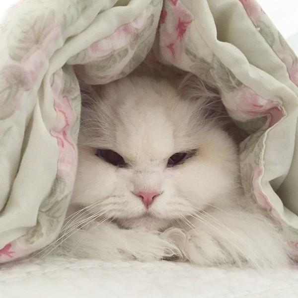 katten5