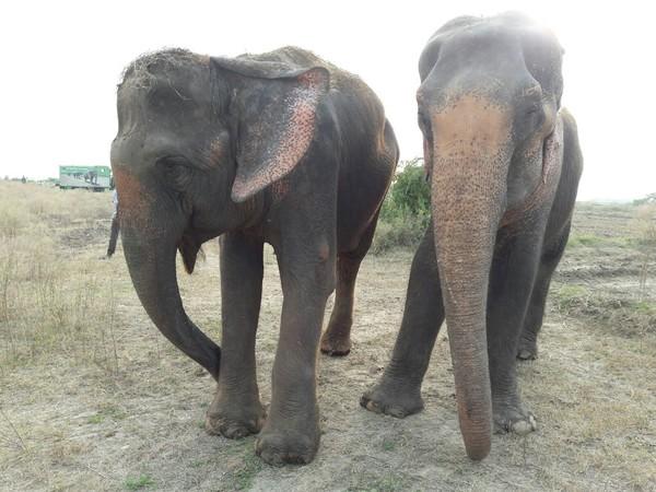 elefantfri2
