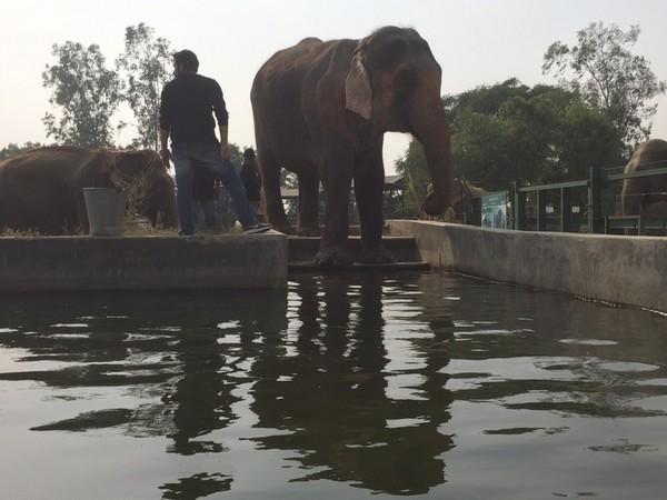elefantfri3