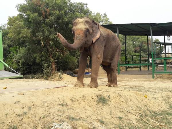 elefantfri5