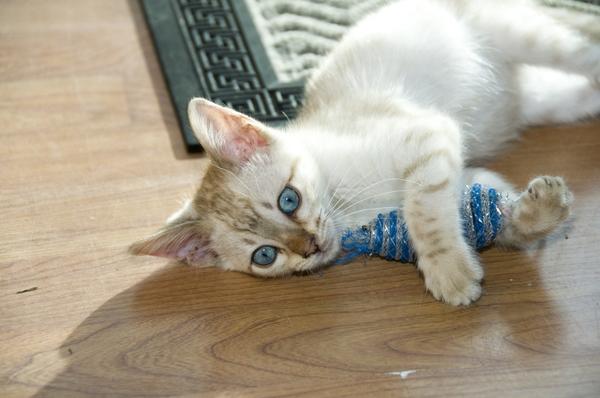 svansen hänger på katten