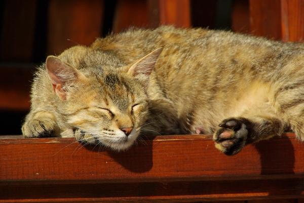 katt sover mycket