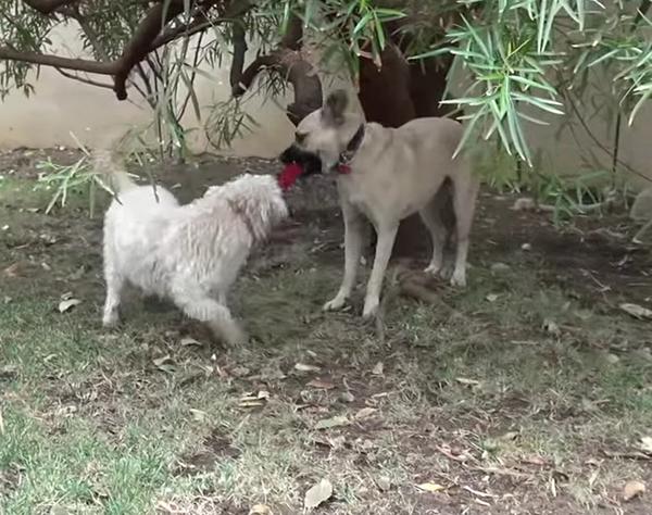 6hunden
