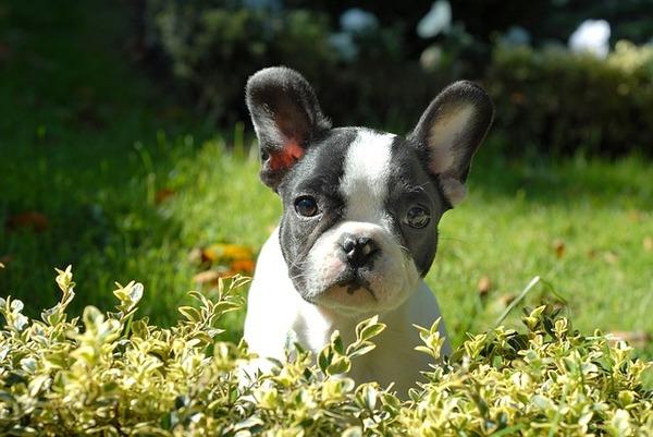 puppy-265420_640