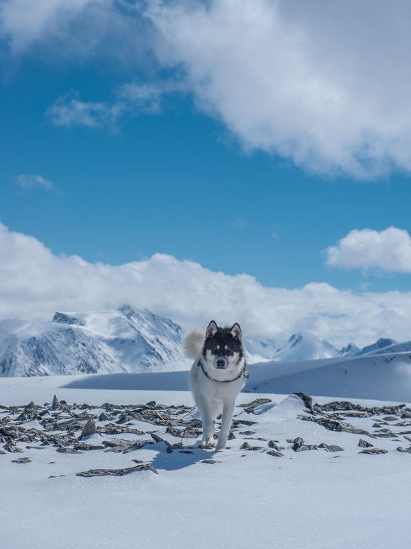 Akiak-the-adventure-dog-5__880