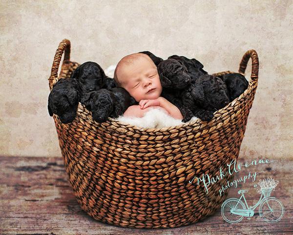 dog-gives-birth-puppies-mother-baby-same-day-kami-klingbeil-1