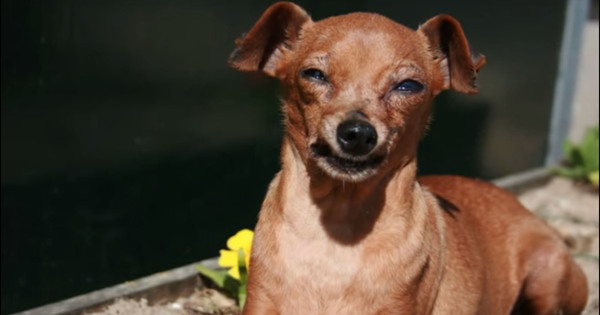 hund sol