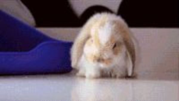 sovande_kanin