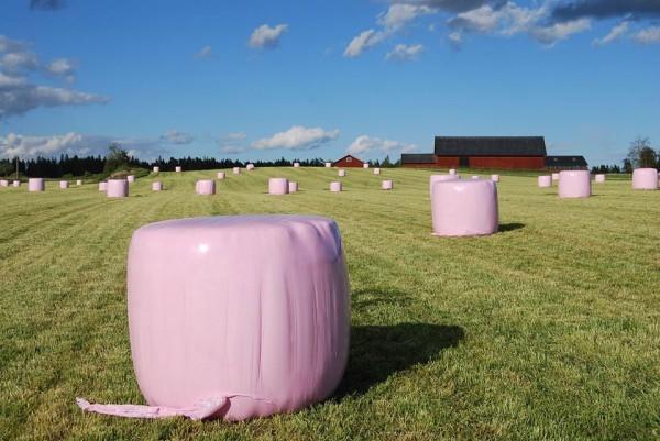 rosaplast