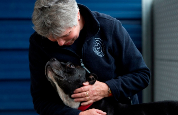 Our-mission-and-values-Battersea-dogs-cats-home-charity