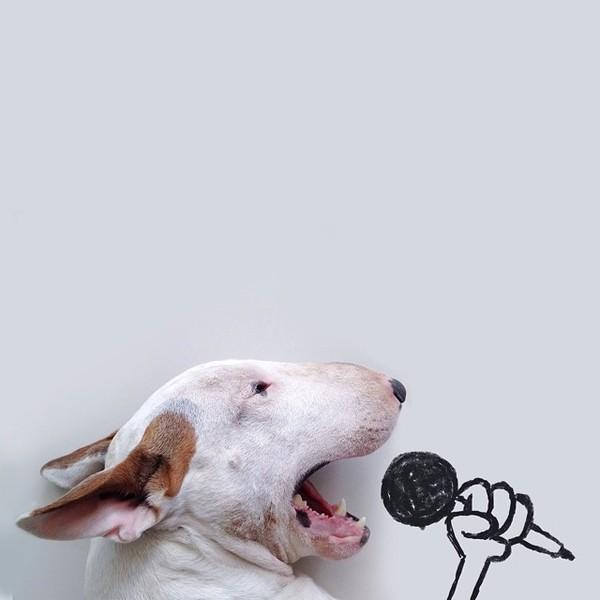 jimmy-choo-bull-terrier-illustrations-rafael-mantesso-1