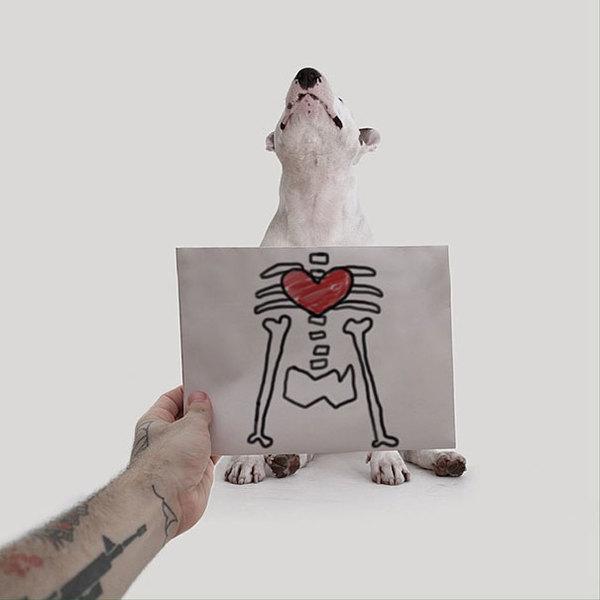 Jimmy-the-Bull-Terrier13__605