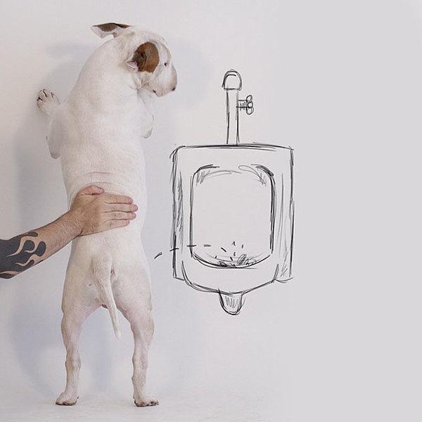 Jimmy-the-Bull-Terrier14__605