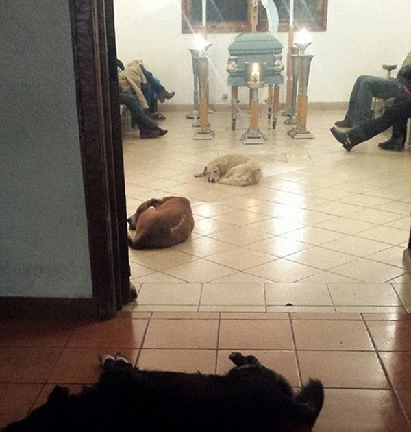 hundar_begravning