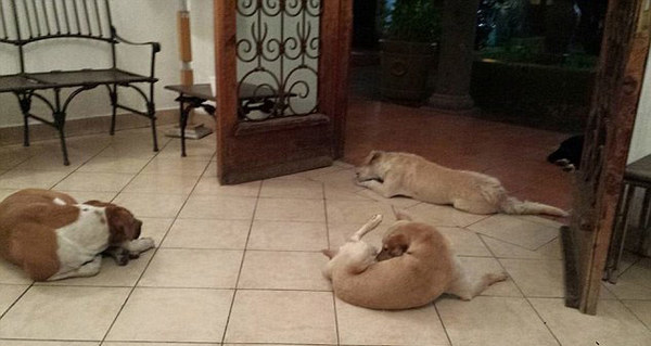 hundarbegravning2