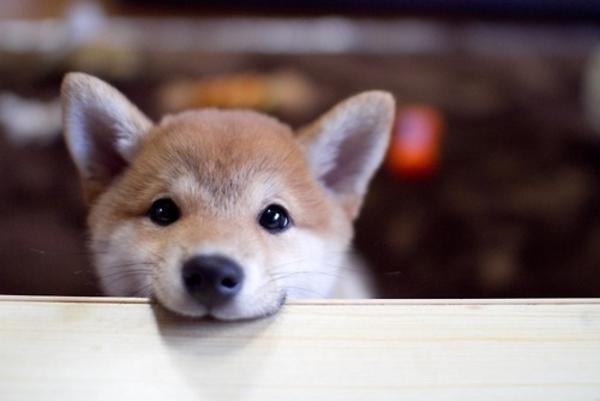53451-Cute-Dog