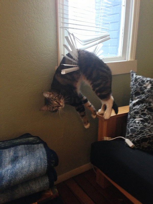 funny-cats-dogs-stuck-furniture-16