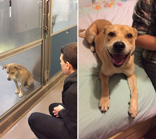 pet-adoption-before-and-after-3__880