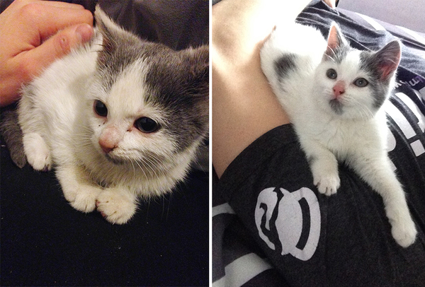 pet-adoption-before-and-after-4__880