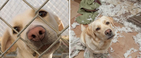 pet-adoption-before-and-after-7__880