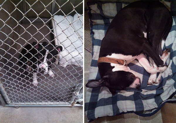 pet-adoption-before-and-after-11__880