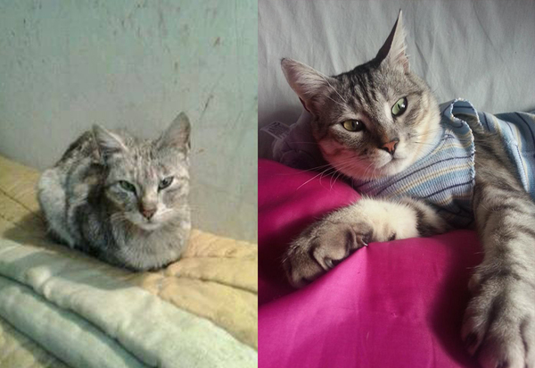 pet-adoption-before-and-after-12__8801__880