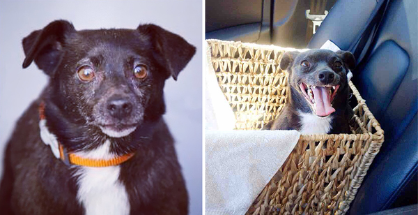 pet-adoption-before-and-after-14__880