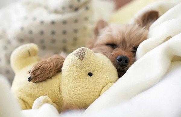 cute-animals-sleeping-stuffed-toys-14