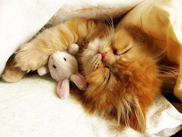 cute-animals-sleeping-stuffed-toys-19