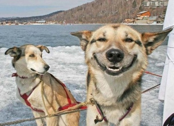 funny-happy-dog-picture