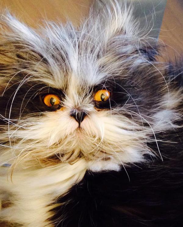 hairy-cat-death-stare-atchoum-15