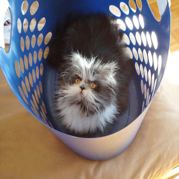 hairy-cat-death-stare-atchoum-5