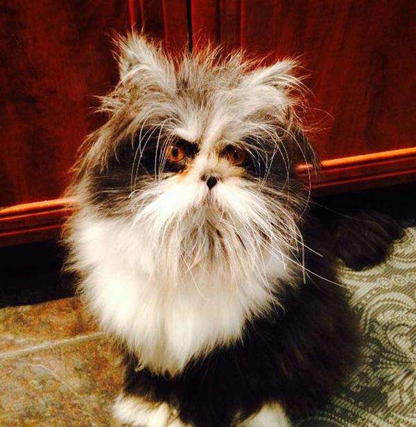 hairy-cat-death-stare-atchoum-9