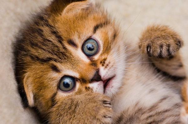 24061-little-kitten