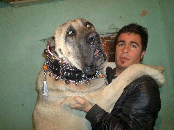 big-dog