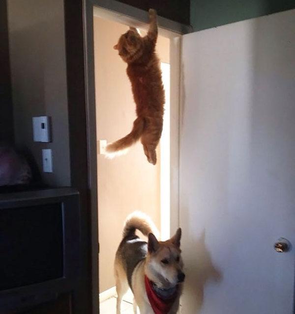 ninja-cat-hiding-funny-107__605